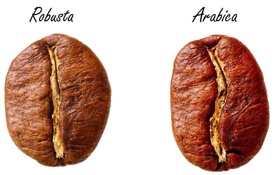 Arabica e Robusta: caffè verde